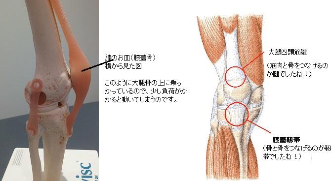 腱と靱帯の違いはもう大丈夫ですよね??