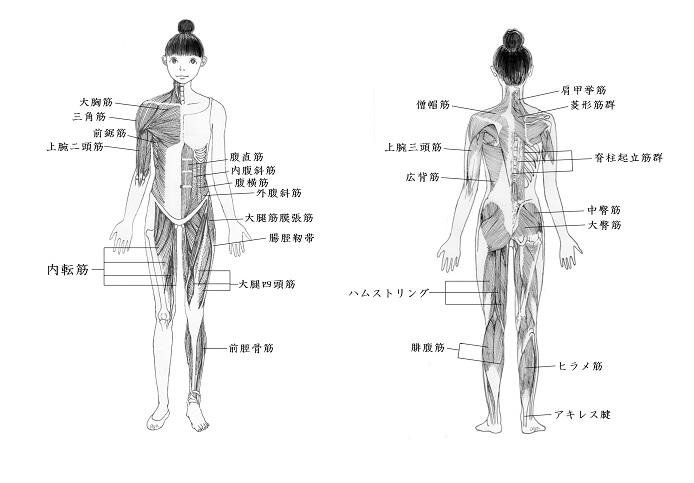 腹筋ー前の肋骨から、前の骨盤。 背筋とおしりー後ろの肋骨、背骨、骨盤 広背筋ー骨盤から肋骨をサイドにカバー